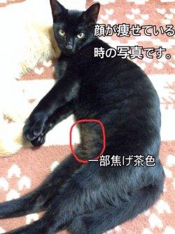 画像1: 迷子猫,愛知県岡崎市舞木町 平成28年3月20日