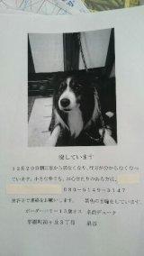 迷子犬,奈良県生駒郡平群町,ボーダーコリー,平成26年12月20日